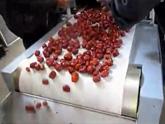 微波红枣杀菌机,红枣干燥设备